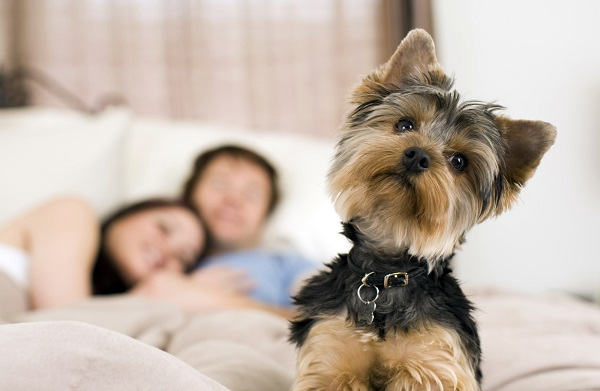 Pet Friendly Rental Apartments in Dallas | Fort Worth